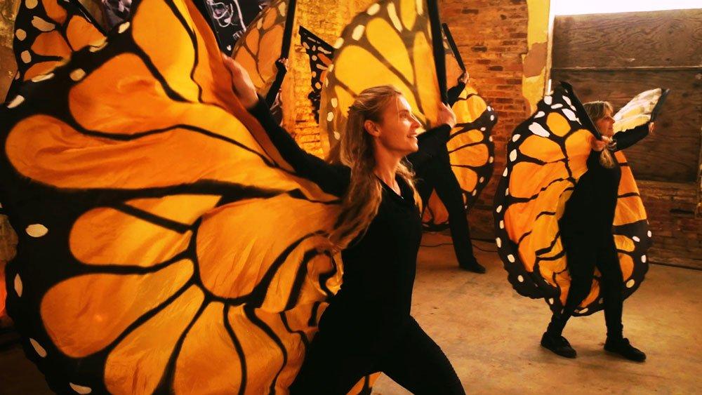 Butterfly.00_12_52_23088.Still025